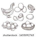 chicken sketch. healthy natural ... | Shutterstock .eps vector #1655092765
