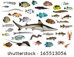 fish | Shutterstock . vector #165513056