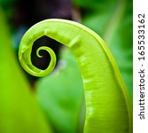 Green Leaf Curl Into A Spiral