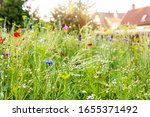 Urban Gardening With A...