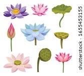 Lotus Aquatic Plant With Large...