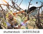 Seasonal Pruning Trees With...