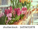 Lots Of Flowers In Pots On The...