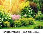 Mixed Border In Summer Garden...