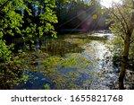 Forest Spring Landscape With...