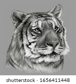 Tiger S Head Isolated On Gray...