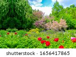Summer Garden On Green Nature...
