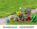 Gardening Tools And Flowers In...
