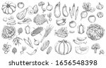 vegetables  farm food vector... | Shutterstock .eps vector #1656548398