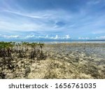Unusual Landscape Of Mangrove...
