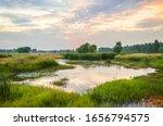 Ecological Wetland Environment...