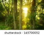 sunbeams in wild and dense...   Shutterstock . vector #165700052