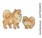 cute cartoon pomeranian dog and ...   Shutterstock .eps vector #1657042855