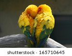 pair lovebirds | Shutterstock . vector #165710645