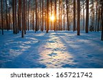 Winter Landscape With The Pine...