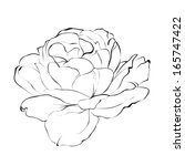 contour of rose isolated over... | Shutterstock . vector #165747422