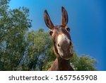 Close up shot of donkey head
