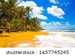Small photo of Tropical sand beach waves view. Sandy beach palm trees landscape. Palm beach sea waves view