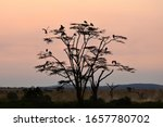 Birds on a tree at sunset ...