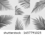 vector transparent shadows of... | Shutterstock .eps vector #1657791025