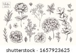 vector collection of hand drawn ...   Shutterstock .eps vector #1657923625