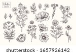 vector collection of hand drawn ... | Shutterstock .eps vector #1657926142