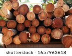 Coconut Tree Trunks Cut And...