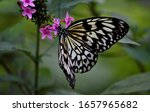 Paper Kite Butterfly Large Tre...