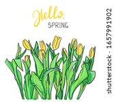 hand drawn spring flowers  ... | Shutterstock .eps vector #1657991902