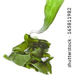 Seaweed Kelp   Laminaria   Hea...