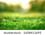 Spring And Nature Background...