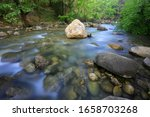 Lamdscape with mountain stream in green forest