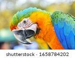 Herlequin Parrots Bird  Macaw...