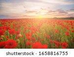 Poppies On Green Field On...