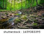 Ilse Brook In The Forest Of The ...