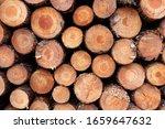 Large Stack Of Logged Pine Tree ...