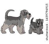 cute cartoon schnauzer vector...   Shutterstock .eps vector #1659796915