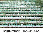 spring onion tree  organic... | Shutterstock . vector #1660343065