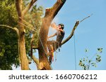 Arborist cutting tree, action shot. Chainsaw, rigging ropes, sawdust, warm sunset light and blue sky. - stock photo