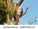 Arborist Cutting Tree  Action...