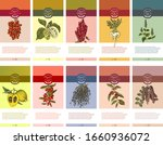 colorful superfood banners with ...   Shutterstock .eps vector #1660936072