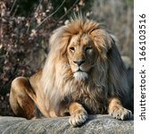 Majestic Lion Portrait