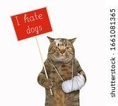 The Beige Cat With A Broken Leg ...