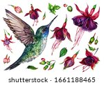 Watercolor Collection Of Flying ...