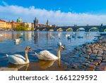 Swans On Vltava River In Prague ...