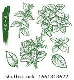 mint spice set  peppermint ...   Shutterstock .eps vector #1661313622