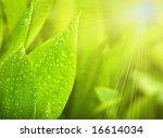 gardens grass with the lilies... | Shutterstock . vector #16614034