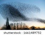 Beautiful large flock of...