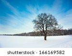 Bare Oak Tree In The Snowy...