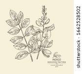 background indigofera tinctoria ...   Shutterstock .eps vector #1662528502